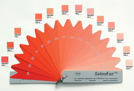 salmonfan